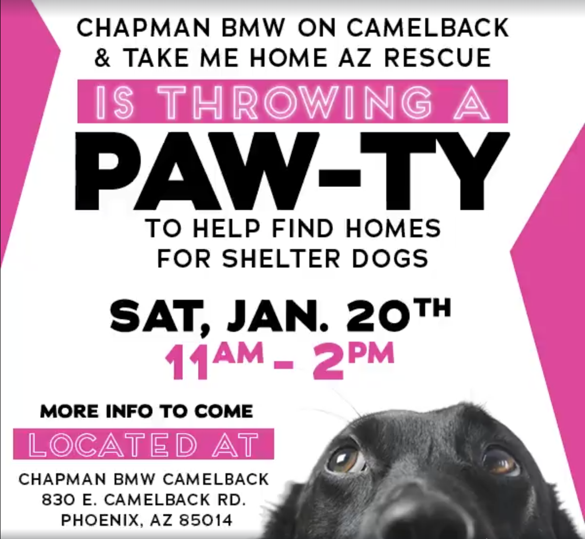 Chapman Bmw On Camelback >> Chapman BMW's Adoption PAW-TY! - Pawtown
